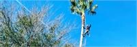 SkyView Tree Service